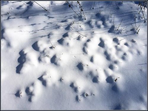 winter snow cold landscape seasons alien january