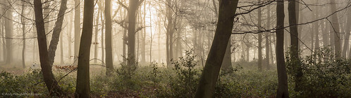 wood morning trees england panorama mist andy unitedkingdom sony treescape hough stiching ashampstead andyhough norcot slta77 norcotwood