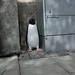Urban Penguin
