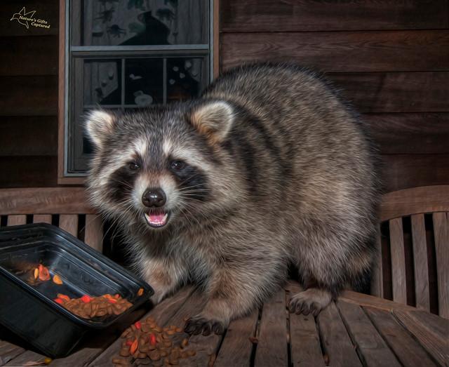 Furry Rascal & Thief