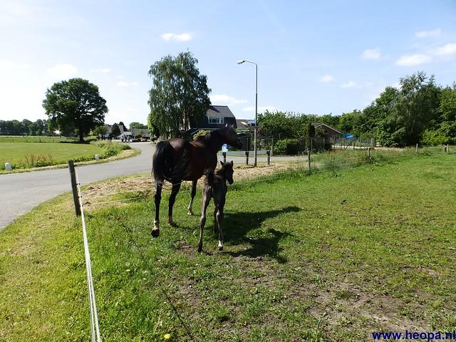 17-05-2014 Nijkerk 43Km (80)