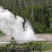 South Grotto Fountain Geyser (Grotto Group, Upper Geyser Basin, Yellowstone Hotspot Volcano, nw Wyoming, USA)