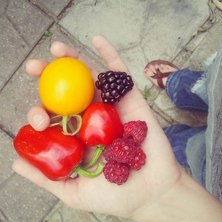 first sweet red peppers + first ripe blackberry! today is looking up :) | by rachellake
