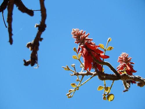 Waterberg - bloem
