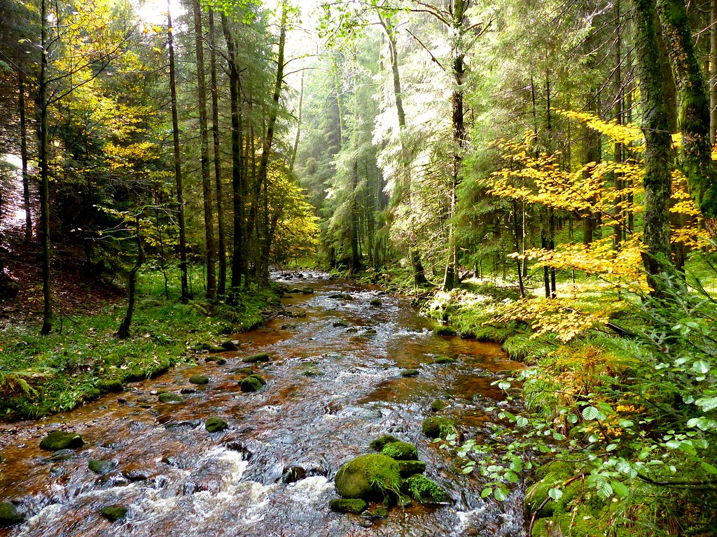 The Forest Deutsch Stream