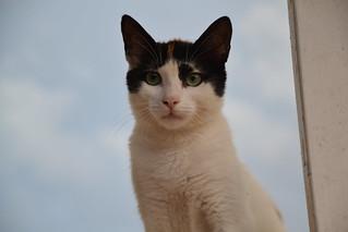 Cat in Tunisia