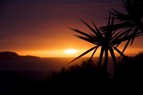 españa sunrise andalucía spain costadelsol nerja spania yuccaelephantipes