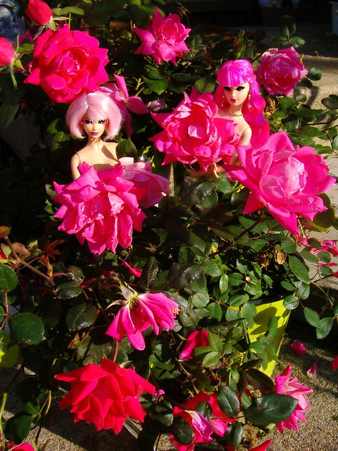 Rose garden fairies