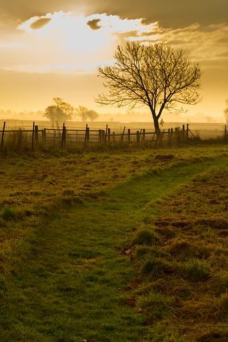uk light orange mist colour tree castle nature sunrise landscape glow shropshire shade shawbury moretoncorbetcastle ellesmerefnc