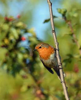 Bird Biography