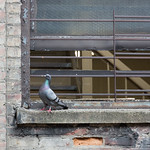Douglass guarding the window