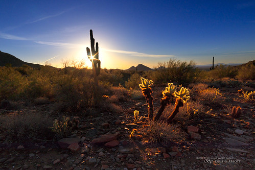 sunburst usa manualfocus lens rokinon12mmf2wideanglemirrorlesslens adobelightroomcc 2016 mirrorless dustinabbottnet scottsdale cactus sunrise dawn 2017 silhouette thousandwordimages travel review photography camera ontario arizona comparison canoneosm5 adobephotoshopcc photodujour dustinabbott unitedstates us saguaro