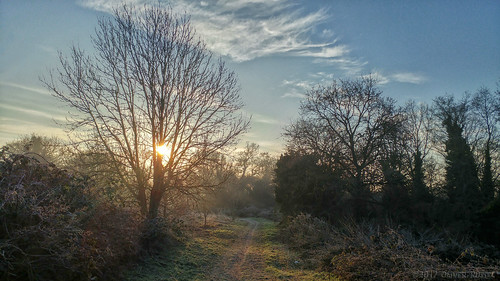 2017 oru uk surrey hersham hershamriversidepark morning walk path tree sunshine sun winter cold park sunrise mobilephotography widescreen 169 antientertainers