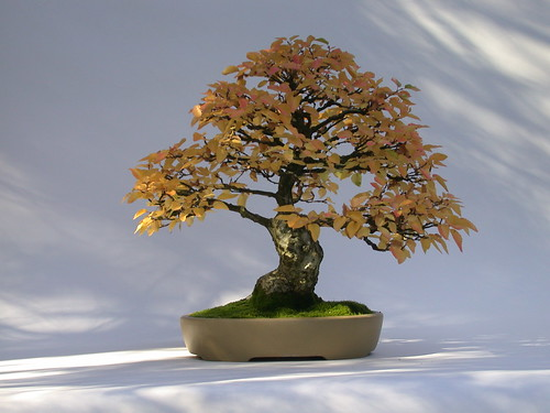 Milwaukee Bonsai Society Display Of Fall Color Lynden Sculpture