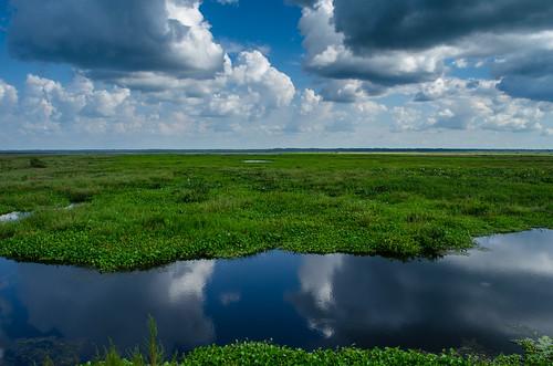 lake clouds florida gainesville swamp paynesprairie