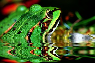 IMG_0372_water-reflection