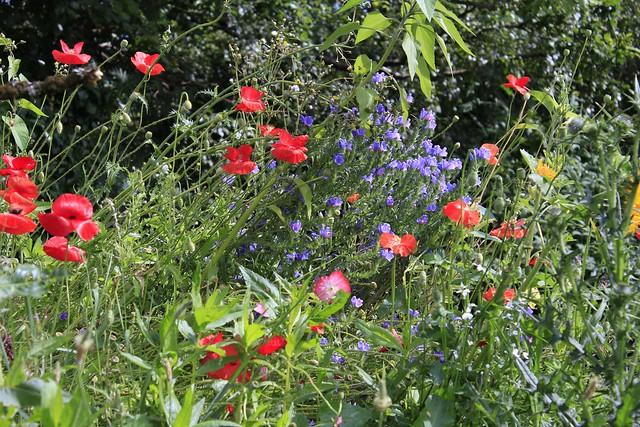 My Wildflower Garden