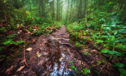 trail tahomajuniorhigh trees nature
