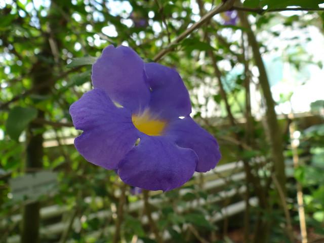 Alleen und Blätter, niemals ganzgeglaubte Götter, die altern in den gradbeschnittnen Bahnen, höchstens angelächelte Lianen wenn die königliche Pflanze wie im Wind die hohen Morgen teilend  aufbrach, übereilt und übereilend, höchstens angelächelte, doch nie gesehen im  Botanischen Garten 00759