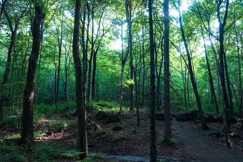 wood canada nature forest photoshop canon montréal quebec montreal québec canondslr forêt bois lightroom 70d livemontreal canon70d