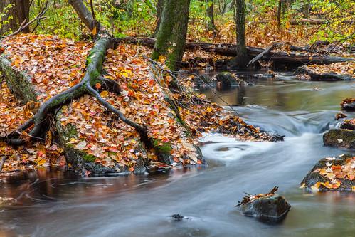 fall autumn leaves flow newengland harvardma canon5dmarkii