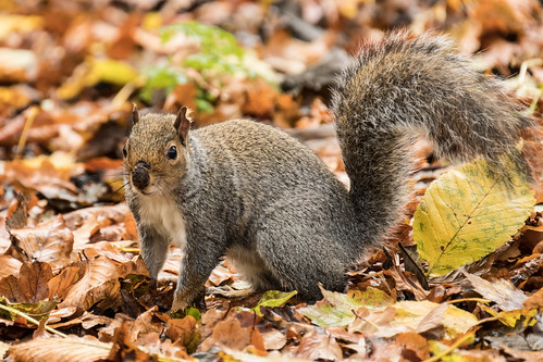 Squirrel | by karl101