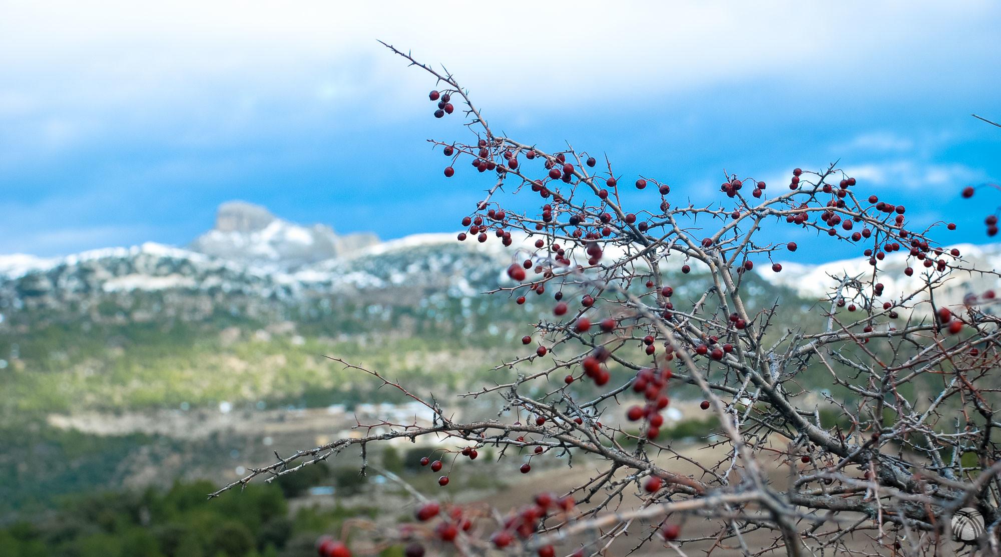 Vistas hacia atrás: rosal y el castellón de los Mirabetes