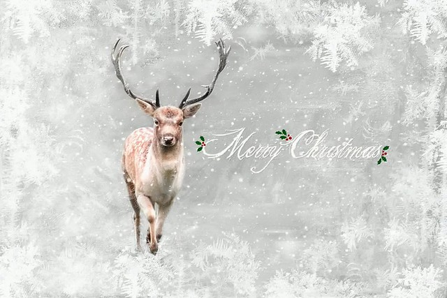 we wish you a merry christmas . . .