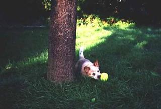 A little dog in long grass