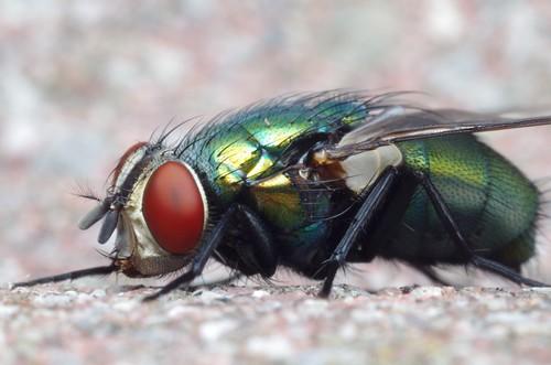A Fly Again | by Doundounba