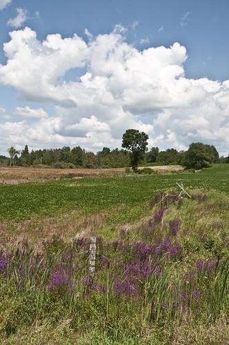 trees sky field clouds wildflower rideauferry