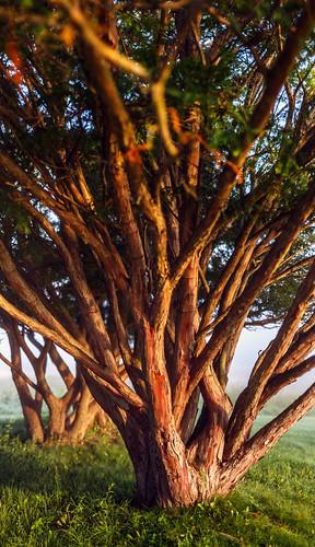 morning trees ny newyork sunrise upstate canonef50mmf14usm saratogabattlefield canoneos6d saratoganationalhistoricpark samanthadecker adobephotoshopcs6