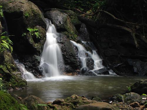 longexposure fern water canon geotagged hawaii waterfall rainforest stream oahu ferns juddtrail canonpowershotsx10is oahuphotographytours honoluluwaterhshedforestpreserve