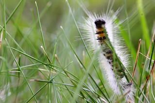 caterpillar   by graemeandginbooyah