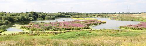 North Lake at Beddington Farmlands, by Peter Alfrey   by Beddington Farmlands