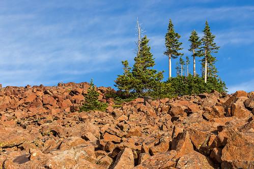 Rocks & Trees | by IntrepidXJ
