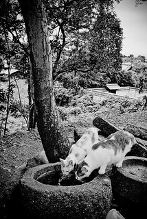 Double Drinking Felines, Kyoto | by jacob schere [in the 03 strategically planning]