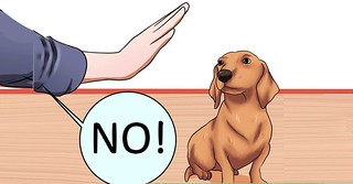 How Long Does it Take to Potty Train a Puppy? - Are You Do ...