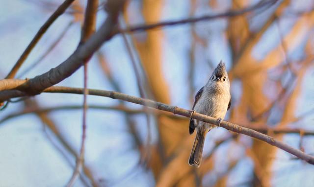 Got Any Bird Seed?