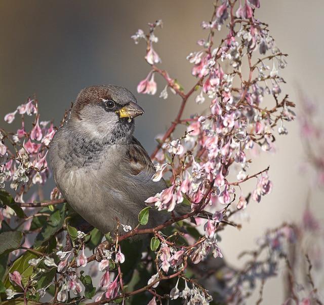 Mr Sparrow