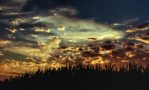 sunset summer sky silhouette clouds rural skyscape landscape evening cornfield dusk farm carrollcountymaryland uppercomaryland sonya65v summer2014 zunikoff