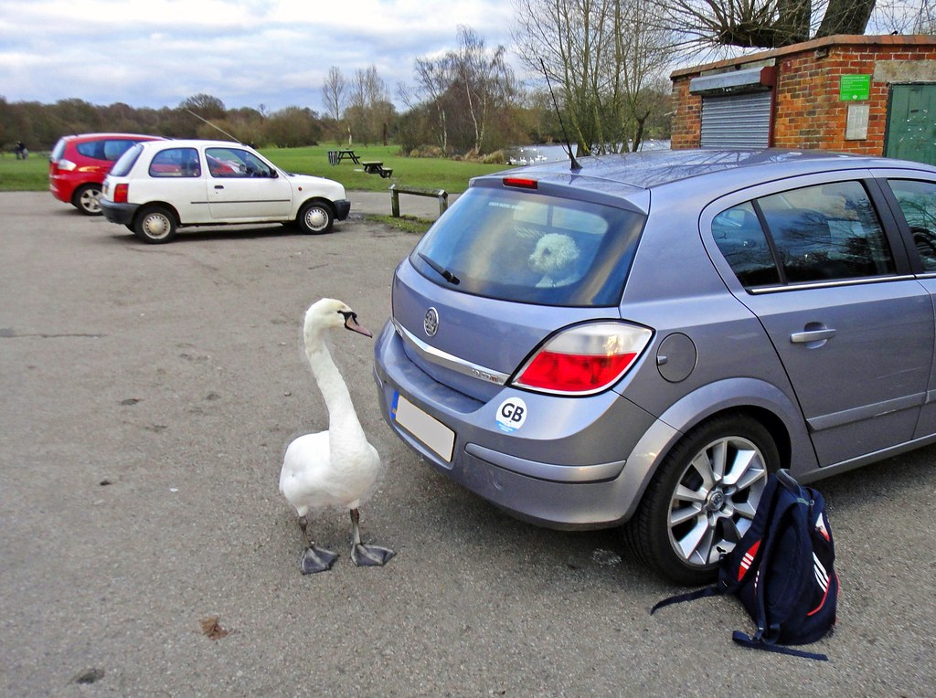 Redhill - Earlswood Lakes - Feb 2013 - This is MY Parking Space - Clear Off