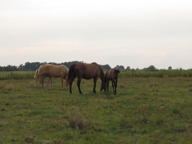 Foal Nursery