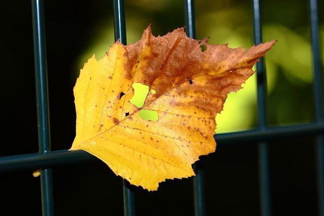 Série. Les feuilles prisonnières 04  Halloween / Series. Leaves prisoners 04 Halloween