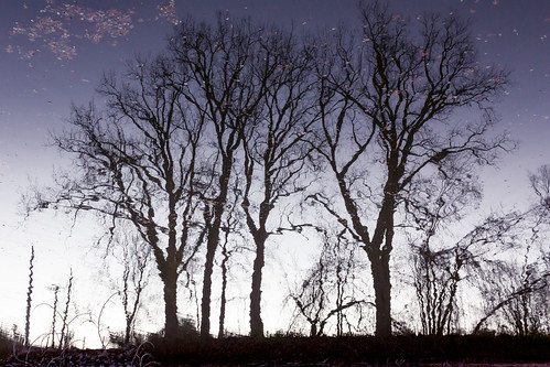 squiggle trees | by Christian Collins