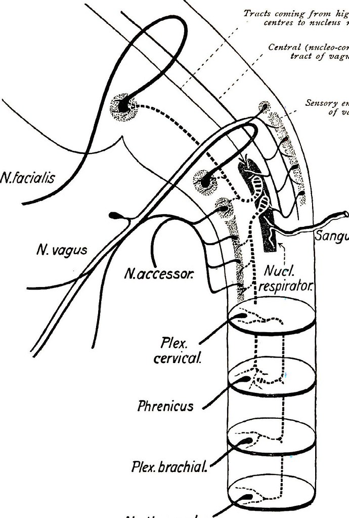 Image From Page 210 Of Brain And Spinal Cord A Manual Fo