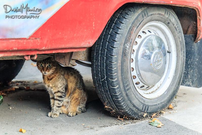 Tired cat by Daniel Mihai