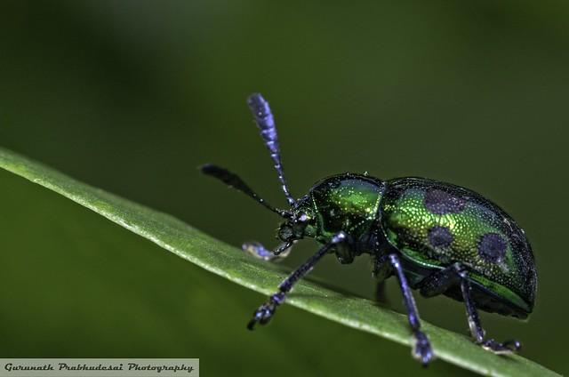 Bug or Jewel?.......It's the Jewel Bug
