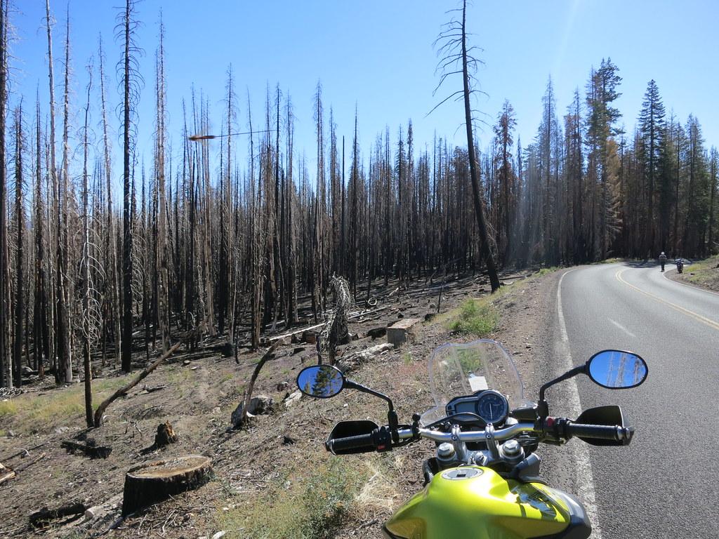forêt après un incendie en Californie