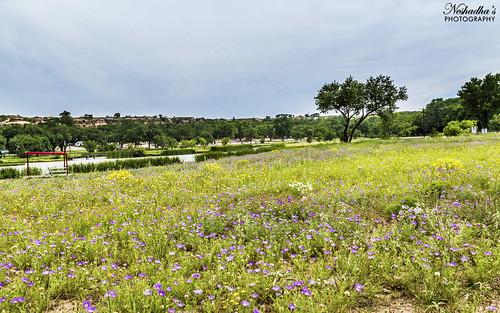 flowers wild summer usa flower tree green field canon texas tx westtexas lubbock 6d 2014 buffalospringslake neshadha